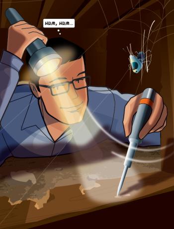 Recherche de termites par le diagnostiqueur lors du diagnostic termites